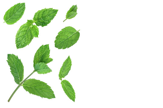 fresh green mint leaves isolated on white background, top view. Flat lay. With copy space for your text