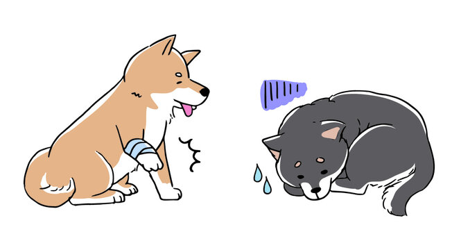 怪我をして体調の悪い柴犬