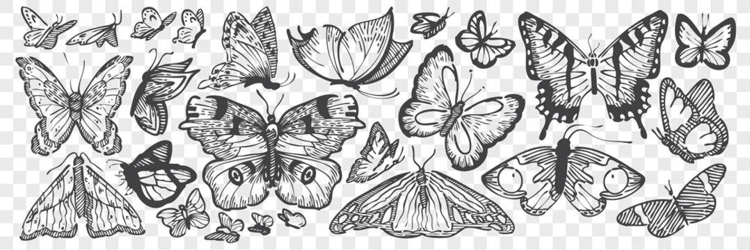 Hand drawn butterflies doodle set.
