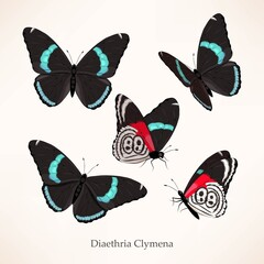 Vector set of butterfly in five different views