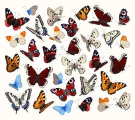 Big vector set of high detailed butterflies