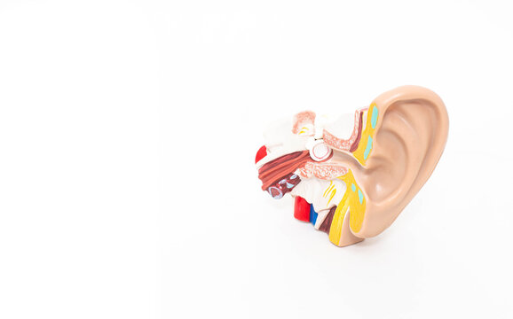 Mock ear of a man on a white background. The concept of diseases of the outer and middle ear, otitis media. Copy space, inflammatory process