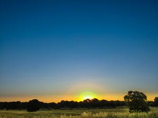 krajobraz pola widok trawa niebo drzewo - fototapety na wymiar