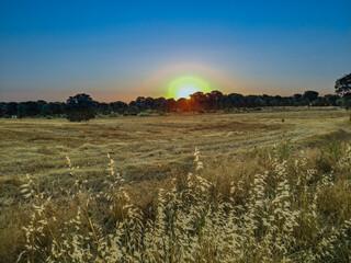 krajobraz pola widok trawa niebo drzewo