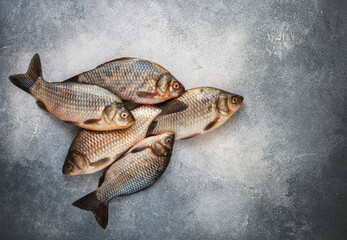 Crucians. Freshly caught raw fish on a gray concrete or stone background. Selective focus, top view and copy space