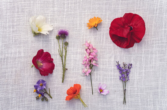 Different flowers arranged on fabric, top view