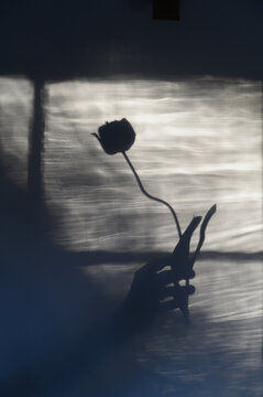 Shadow of woman holding flower