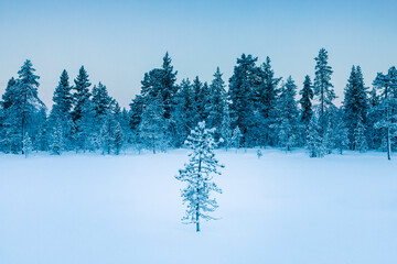 Winter landscape with trees, Hetta, Enontekioe, Finland