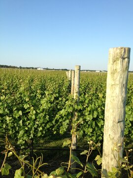 vineyard long island new york