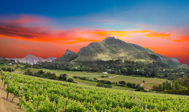 View of constantia wine valley from glen constantia wine estate cape town south africa