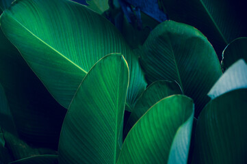 Wall Mural - tropical leaves colorful flower on dark tropical foliage nature background dark green foliage nature