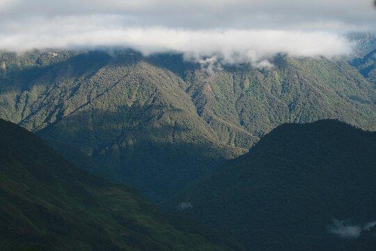 Peruvian Cloud Forest
