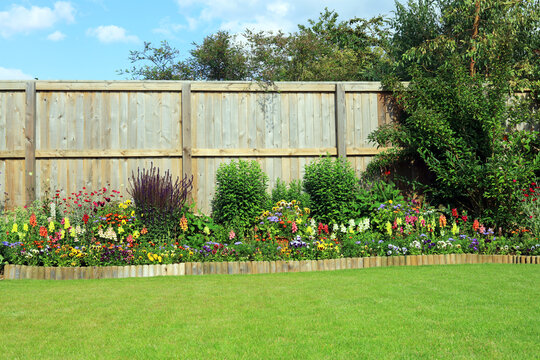 A flower And shrub border in a pretty garden surrounded by a wooden fence and well maintained lawn.