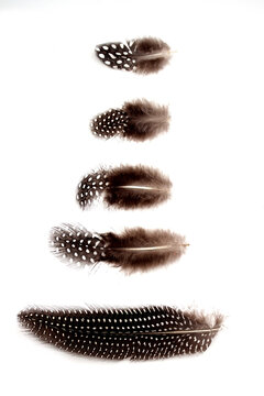 Feathers on a white background as a nature study