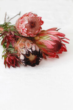 Proteas on a white damask cloth with space for text