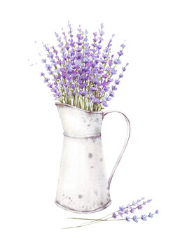 Hand-drawn lavender flowers with leaves in pot closeup isolated on a white background. Hand painting on paper. Watercolor illustration of a bouquet of lavender, Provence, herbs, vintage card, vintage