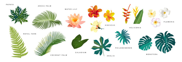 Fototapeta Set of vector realistic tropical leaves and flowers with names isolated on white background. Artistic botanical illustration obraz