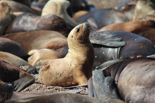 Leões marinhos deitados na praia