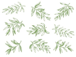 Olive branches. Green greek olives tree branch with leaves decorative hand drawn vector sketch illustration set. Engraved ripe green natural and organic plant twigs isolated on white Wall mural