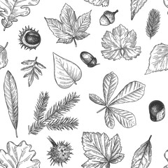 Wall Mural - Autumn leaves seamless pattern. Hand drawn fallen leaf, acorns, cones print for textile. Wallpapers, gift wrap or scrapbook vector texture. Engraved foliage, leaves and spruce needles