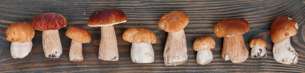 Forest edible mushrooms. Freshly picked boletus on a  wooden background. Selective focus, top view, banner