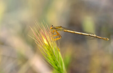 Foto op Canvas Vlinder Macro shots, Beautiful nature scene damselfly.