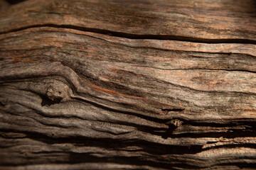 Fotobehang Brandhout textuur aged tree trunk textured brak