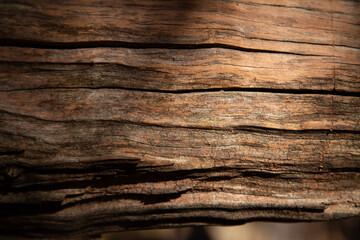 Poster Firewood texture aged tree trunk textured brak