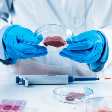 Female Scientist Looking at Meat Sample in Petri Dish in Laboratory