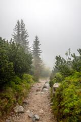 mglisty dzień w górach, droga znikająca w gęstej mgle
