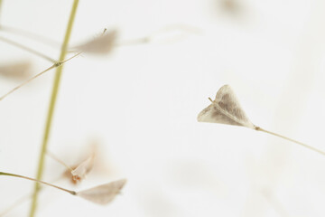 Beige color little heart shape delicate flowers isolated on white background macro romantic...