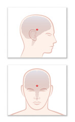 PINEAL GLAND or THIRD EYE. Lateral and frontal view with position in the human brain. Isolated vector graphic illustration on white background.