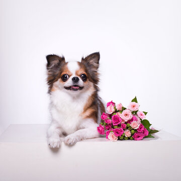 little dog and a bouquet of flowers