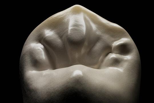 Tooth morphology render