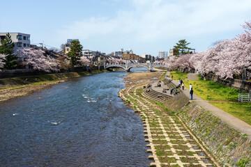 春の金沢 桜咲く浅野川