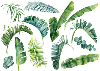 Tropical set of plants on a white background. Watercolor hand painted, summer clipart, palm leaves
