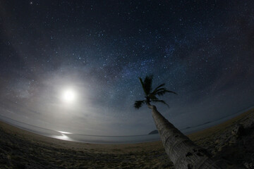 An idyllic night at the beach of a hot, exotic island. An overhanging palm tree creates the feeling of a perfect holiday destination. The stars and the reflected moonlight set a romantic atmosphere.