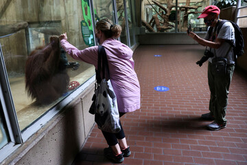Lucy the orangutan and visitor greet each other with mirrored hands as the National Zoo reopens for socially-distanced patrons for the first time since the coronavirus disease (COVID-19) outbreak in Washington