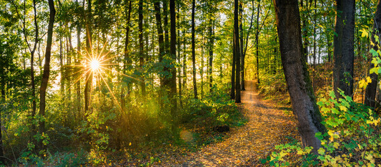 Forest trees panorama background with fall leaves on path