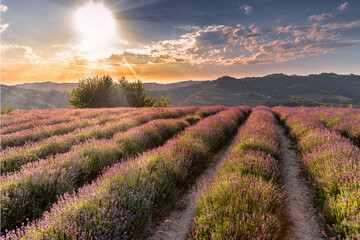 lavender field sunset, Sale San Giovanni,Italy