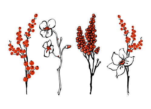 Christmas floral elements: white poinsettia flower branch and red holly berry. Holiday Christmas background. Winter retro t-shirt design. Vector floral watercolor painting on white backdrop.