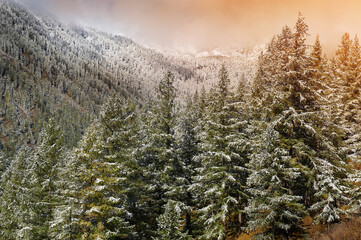 Mountains, winter snowy forest.