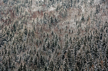 A winter forest view in Chamonix, France