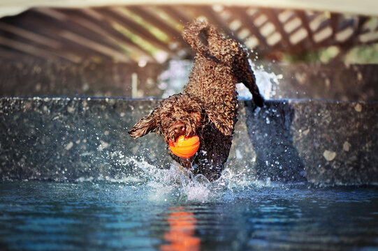 Dog jumping in the fountain with his toy ball