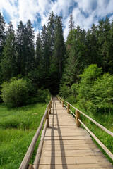 wooden bridge above the creek among the trees. walkway through forest. location synevyr national park, ukraine