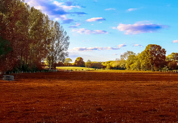 Deurstickers Rood paars Beautiful panorama view on a golden autumn landscape found in europe