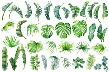 Tropical palm leaves set on white background. Watercolor hand-painted, summer clipart - fototapety na wymiar