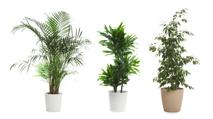 Set of different houseplants in flower pots on white background. Banner design Wall mural