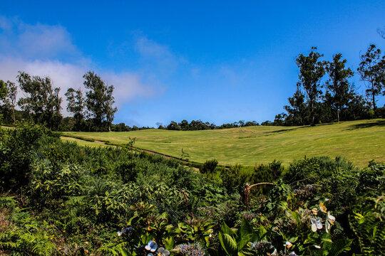 Un parque de arboles verdes y un cielo azul