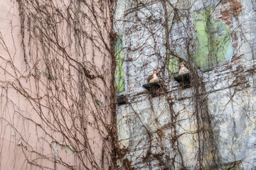 Figurines of hens on the building wall on Podmurna Street in old part of Torun historic city in north central Poland